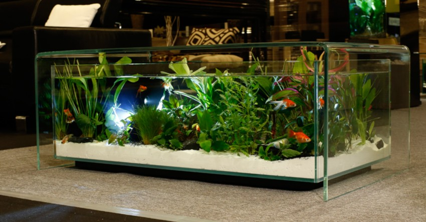 table basse aquarium 100% transparente