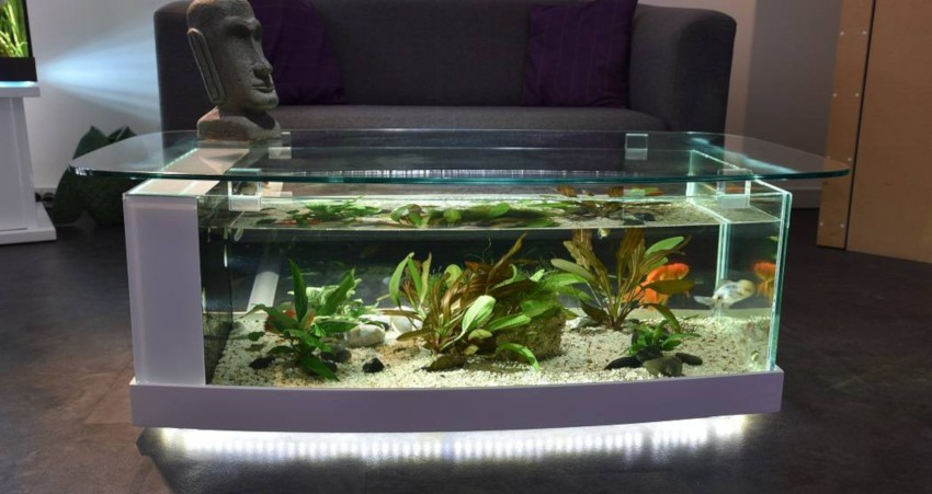 table basse aquarium avec plateau de grande dimension