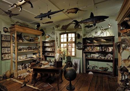 cabinet de curiosité du 16ème siècle